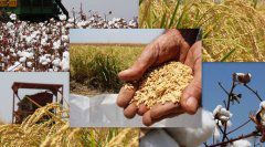 Investment Biomass Energy and Feed Business in Pakistan