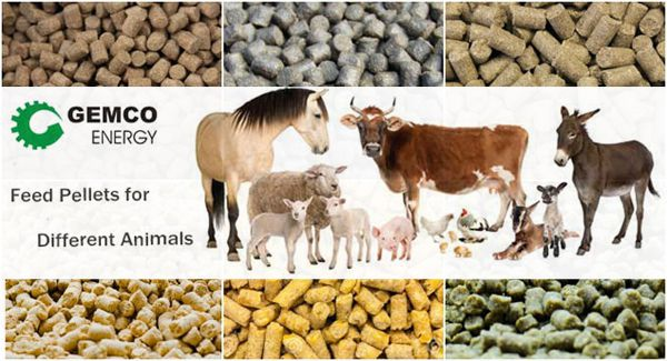 Feed Pellet for Animal