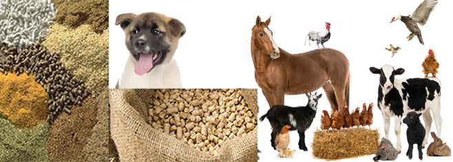 Feed Pellets for Animals